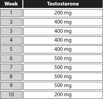 testosterone cycle