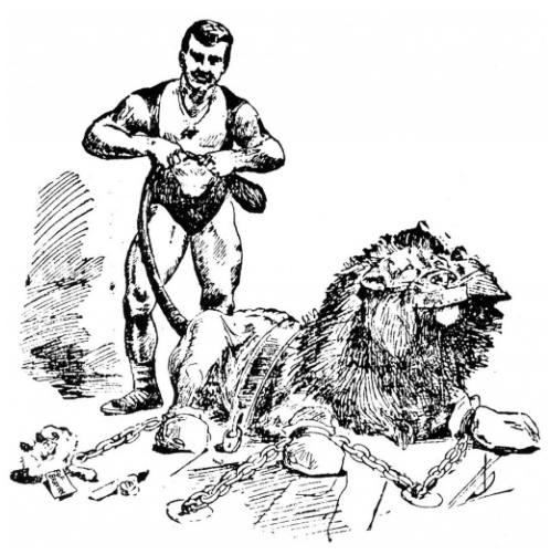 sandow lion